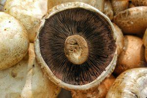 właściwości lecznicze grzybów