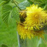 Co wspomaga oczyszczanie organizmu? Wszystko na temat oczyszczania organizmu z toksyn